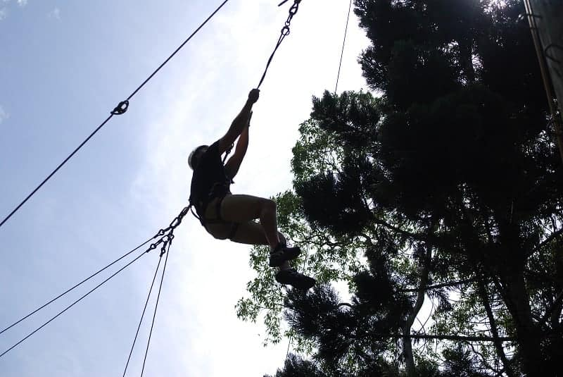 Flying Fox at QCCC